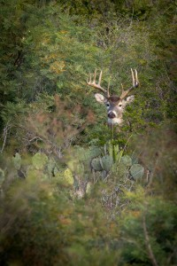 20131222_wildlife_0058